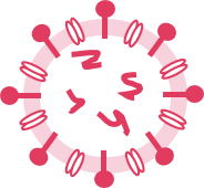 structure of enveloped viruses - destroyed virus rna