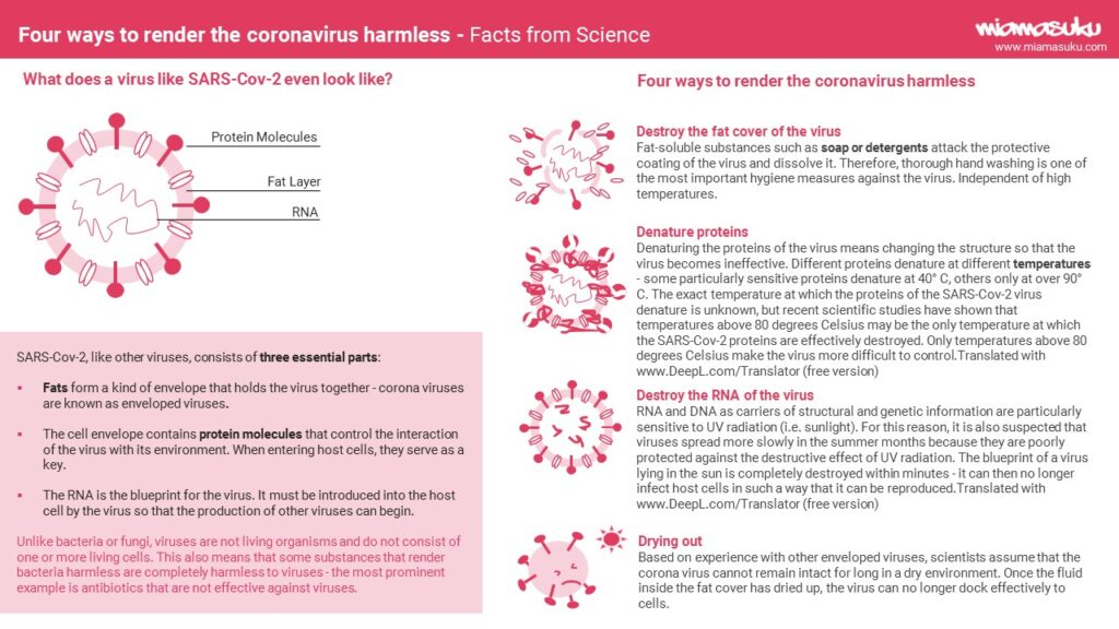infographic - coronavirus structure and what makes it harmless